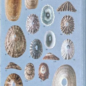Books - Ecology